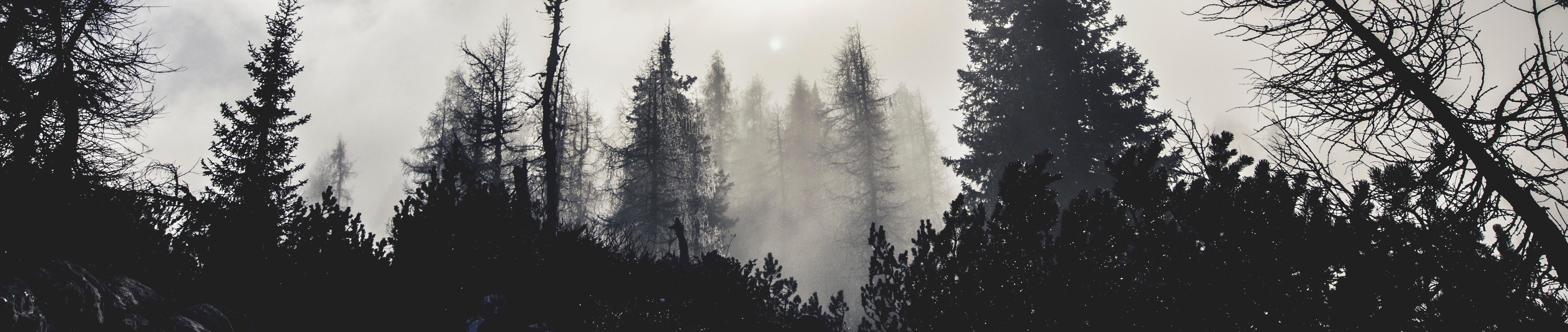 En halvdød skov i tåge