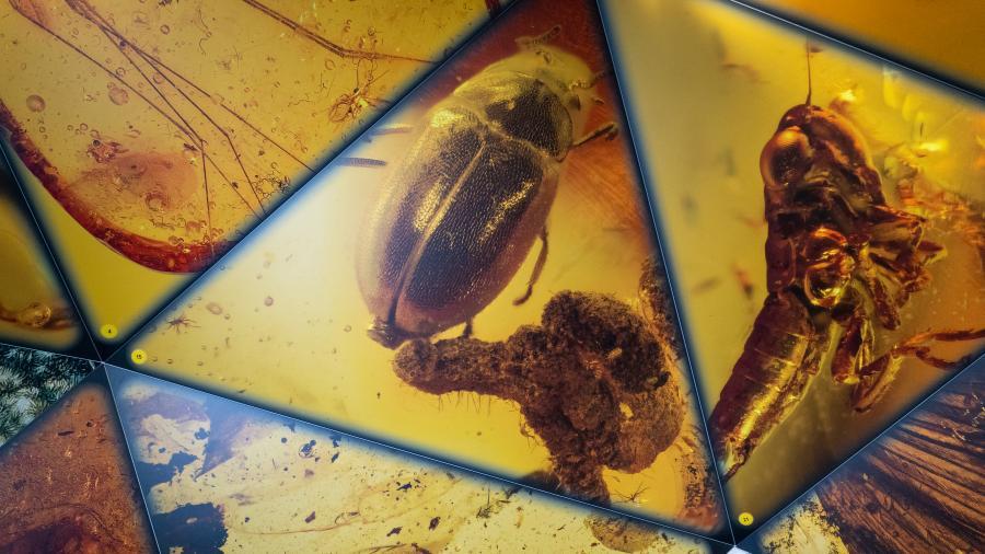 Billedet forestiller insekter indkapslet i en form for harpiks.
