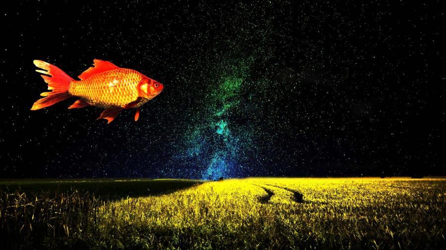 Drømmeagtigt billede med en gyldfisk, der flyver eller svømmer over en mark
