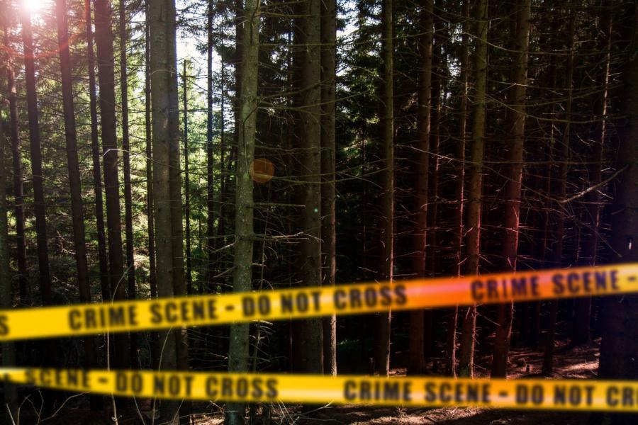 Billedet forestiller en skov med polititape.
